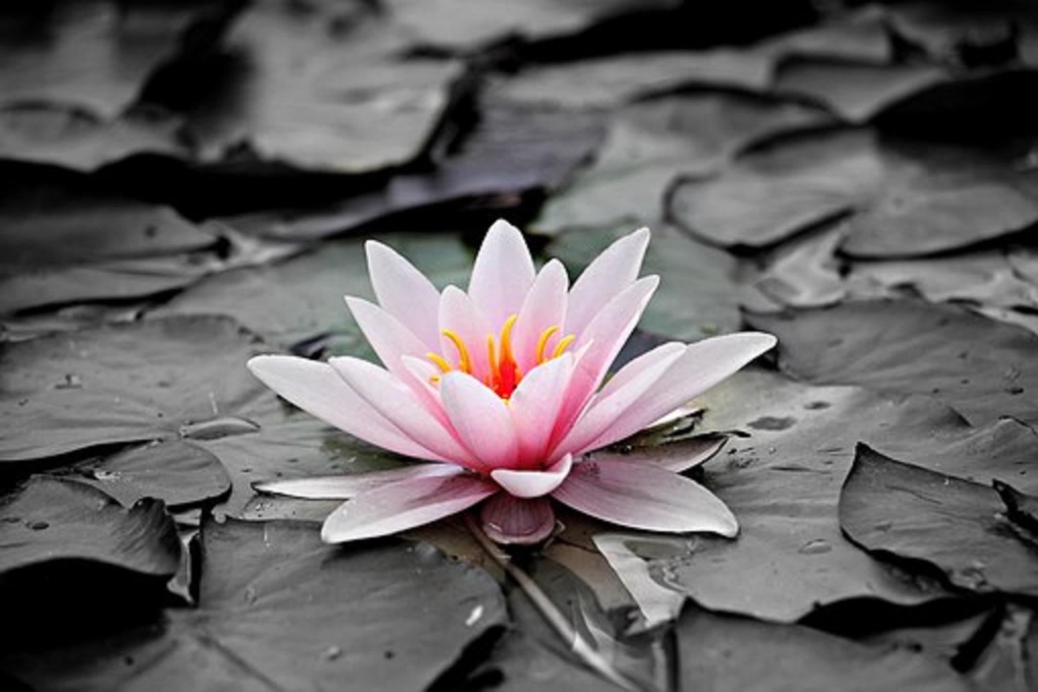 Meditação e Presença