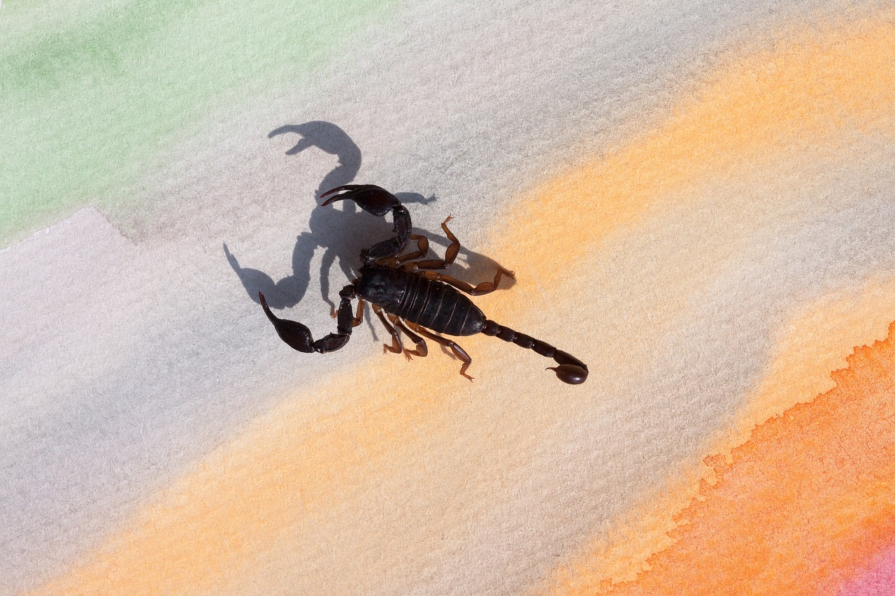 A lenda do monge e do escorpião